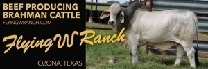 Flying w Ranch 300×100