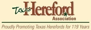 Texas Hereford 300×100