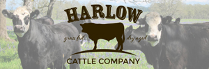 Harlow Cattle Co. 300×100