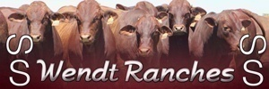 Wendt Ranches 300×100