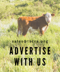Advertise with us sample button